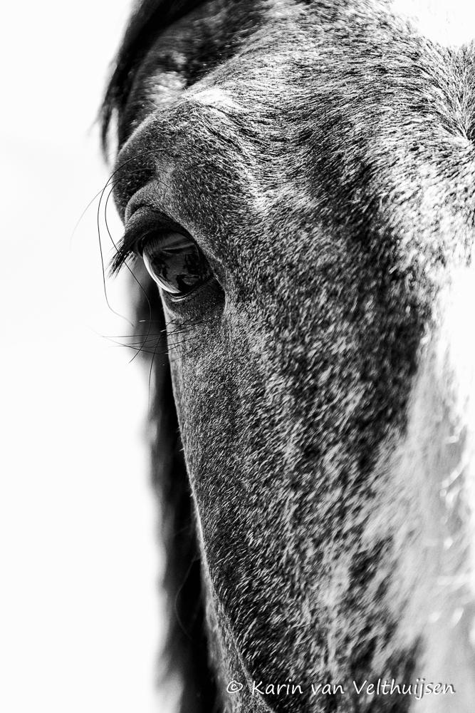 paard-bewerkt-1